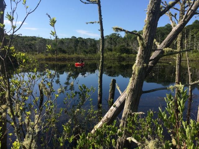 Cedar_Swamp